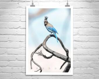 Stellar Jay, Blue Jay, Bird Photography, Blue Bird Art, Mountain Jay, Nature Photography, Wildlife Art, Vertical Print, Gift for Bird Lover