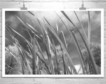Nature Photography, Black and White, Serene, Fine Art Photographs, Cattails, Windy, Breezy, Sky, Clouds, Wetlands Art, Wall Picture