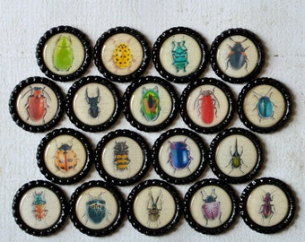 Insect Bottlecap Magnets- Bugs, Beetle, Lady Bug, Bee, Ant- Strong Insect Bottlecap Magnets