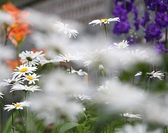 Mom's Garden Photo