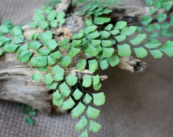 Ferns-Adiantum Luthi-Preserved Green Adiantum (10 pcs)-invitations-Dried Floral-Preserved Ferns-Press...
