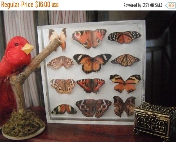 ON SALE Miniature Exotic Butterfly Collection