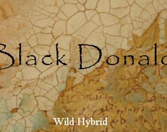 Black Donald Perfume Oil - 5ml Ice, charcoal, black iris, amber and lavender