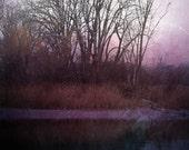 "Abstract landscape photography surreal dark mauve purple black blue woodland - ""Forest edge"" 8 x 10"