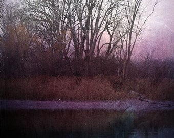 "Abstract landscape photography dreamy surreal dark mauve purple black blue woodland - ""Forest edge"" 8 x 10"