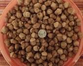 150 Real Organic Acorns
