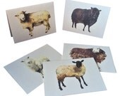 Sheep Portrait Note Cards