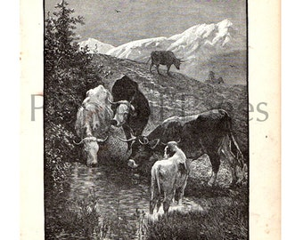 1888 Vintage Illustration from Belford's Annual Images, B&W Illustration, Antique Book Page, Cows Grazing, Vintage Print, Great to Frame.