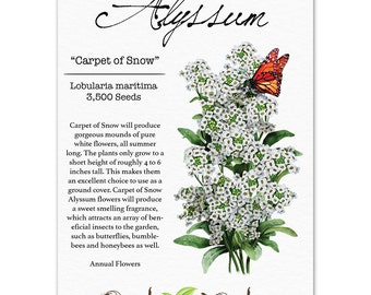 Alyssum Seeds, Carpet of Snow (Lobularia maritima) Open Pollinated Seeds by Seed Needs