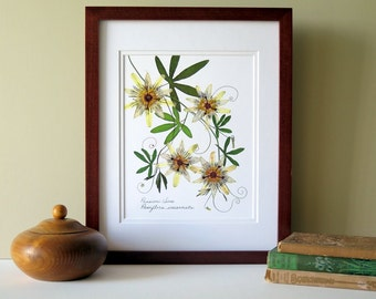 Pressed flower print, 11x14 double matted, Passion flower and Passion vine, wall decor no. 0024