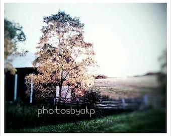 10 x 8 Kentucky Barn and Trees photo print