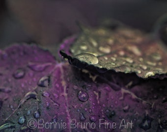 Painted Photo AFTER THE RAIN - choose purple or pink, raindrops, wet leaves wall art, fine art photography, nature prints, home wall decor
