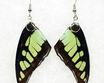 Real Butterfly Earrings - Blue Bottle - Hand Cast Resin