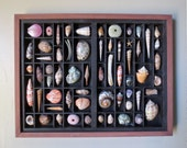 Seashell art, relief, composition, wall sculpture within a letterpress box and featuring the art of cutting shells