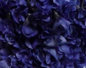 Sweet Pea, Brooklyn Blue Sweet Pea Seeds | Deep Rich Blue  Flowers  Excellent Cut Flower Highly Fragrant lathyrus odoratus