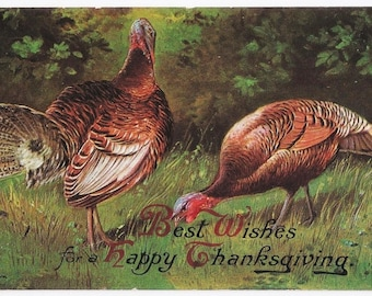 Artist Signed - Antique Thanksgiving Postcard - Thanksgiving Cards, Turkeys, Wild Turkeys, Paper, Ephemera