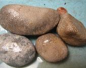 Favosite Charlevoix Stone Coral Petoskey Stone Cousin Michigan Fossil 1 lb Specimen Rough 4 pcs