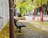 Autumn photography, yellow, golden leaves, German Colony, Jerusalem