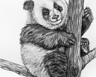 Original pencil Drawing - Panda 11