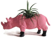 Lucy the mini rhino. Hot pink with little black boots. Planter planted with air plant.