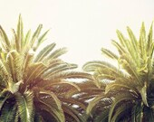 "Palm Tree Wall Art, California, Sunshine, Photography, Palm Tree Print, Los Angeles, Green Tropical Palms,  ""Golden Palms"""