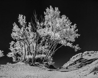 Trees on the Sand Dunes in an Infrared Photo at Sleeping Bear Dunes National Lakeshore in Michigan No.IRBW124 Black and White Photography