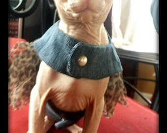 Don Sphynx, cat  outfit