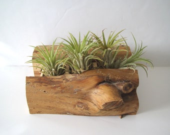 Vintage wooden box/air plant container/ handmade box with drawers/organic element/log