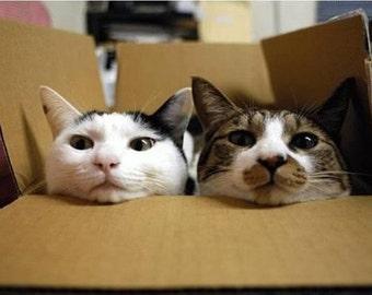 US Overnight shipping