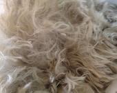 Suri White Alpaca Raw Fleece 4oz from Colorado ranch