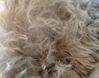 Suri White Alpaca Raw Fleece 4oz from Colorado ranch