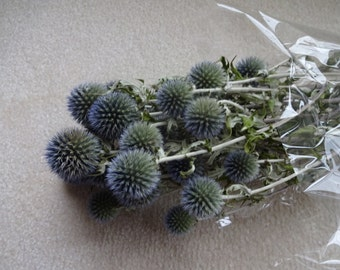 Echinops  Globe Thistle   Dried Globe Thistle  Floral Supplies    Blue Flowers  Dried Flowers  Wreath Supplies  Floral Supplies