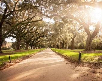Oak Road 11x14 giclee' print