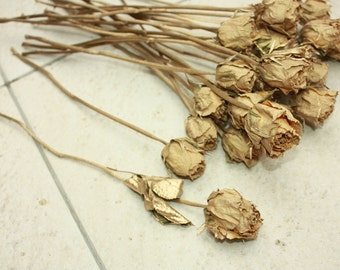 15 Natural Dry Roses with Gold Colour - dried flower bouquet - Roses for Weddings, Luck, Love, Romance and all other Matters of the Heart