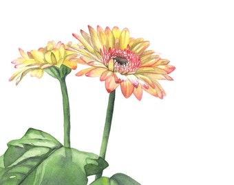 Gerbera print of watercolour painting -G8215 daisy watercolour painting print - minimalist art- botanical wall art A4 size medium print