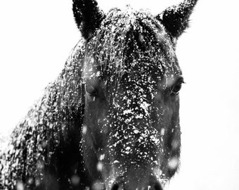 Horse Photography Black and White Horse in Snow