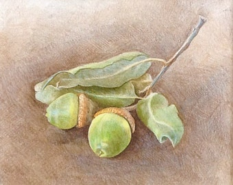 "Colored Pencil Drawing - Acorn Still Life - Original Wall Art - Woodland Home Decor - Mat included with drawing 9""x10"""