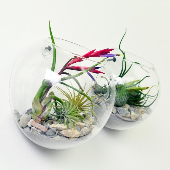Items similar to wall terrarium living wall air plant for Air plant wall art