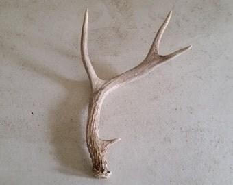 Real natural decorative deer antler design decor crafts art centerpiece gift rustic natural antler sheds