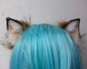 brown kitten ears