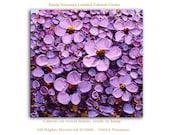 Purple Flowers - Limited Edition - Large Abstract Art Giclee on canvas Home Decor Wall Art Paula Nizamas