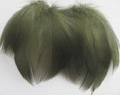 Mallard Barred Feathers - Dyed Olive