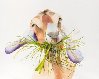 Goat watercolor painting original art print animal art , kitchen art ,goat art, goat, goat print, goat painting, goat watercolor,kitchen art