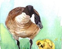 Illustrated Postcards, Postcard Set, Canada Goose' Art, Animal