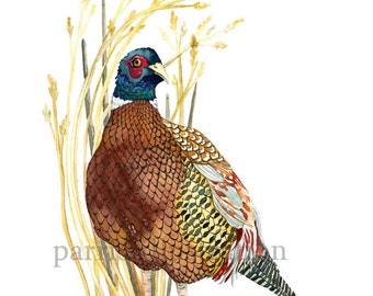 Ring-Necked Pheasant, Archival Print of Original Watercolor, you choose size