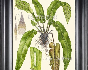 Fern Print Botanical Art 3 Antique Beautiful Green Fern Chart Poster Green Large Forest Summer Plant Nature to Frame Room Wall Home Decor