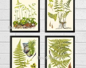 FERN Print SET of 4 Botanical Art Print Lindman Antique Green Ferns Roots Chart Forest Summer Plant Nature to Frame Home Decor Garden