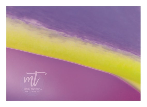Abstract Art Pink and Yellow Extreme Petal Close Up