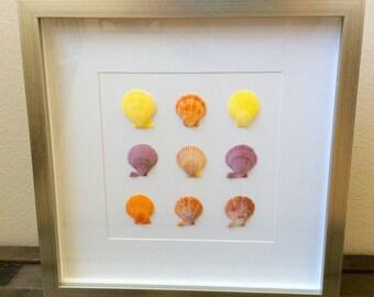Noble Pecten Framed Sea Shells