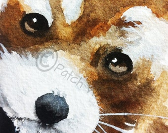 Red Panda Art Print Bear